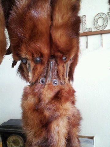 fox furs