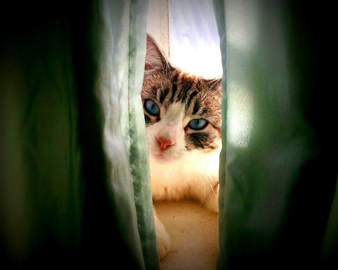 Maud loves sitting on the window sill