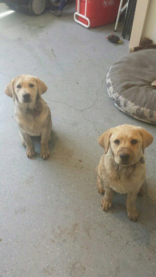 4-26-2015 pups
