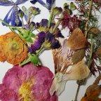 Dried Flowers-Microwave